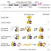 sattler_cellcycle2014_500.100x0.jpg