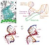 cramer_molecular_basis_of_rna_500.100x0.jpg