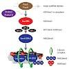 schotta_cellcycle_2013_500.100x0.jpg