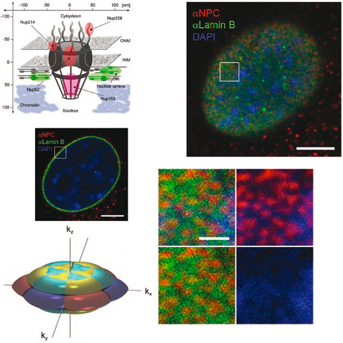 Cipsm Subdiffraction Multicolor Imaging Of The Nuclear